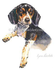 Beagle_-_Bingo_H2O