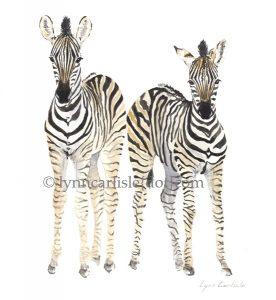 Zebra__2__-_Botswana_Babies_H2O